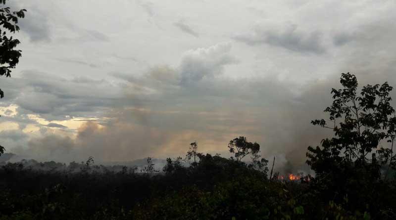 [Fotos] Incendio cerca a Inírida acaba con la vida de un oso 'hormiguero'