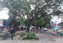 Con el fin de mitigar el riesgo, Alcaldía realiza jornada de tala y poda de árboles en Inírida