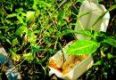 Alcaldía de Inírida prohíbe plásticos e icopores de un solo uso