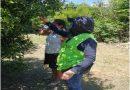 Cultivos de cítricos en Vichada son inspeccionados por el ICA