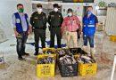 Incautan en Puerto Carreño más de 300 kilos de pescado no apto para el consumo