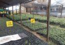 Reforestador El Nativo, el negocio verde que produce y siembra especies nativas en el Vichada