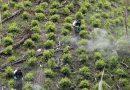 Por tercer año consecutivo Guainía y Vichada presentan reducción en cultivos de coca