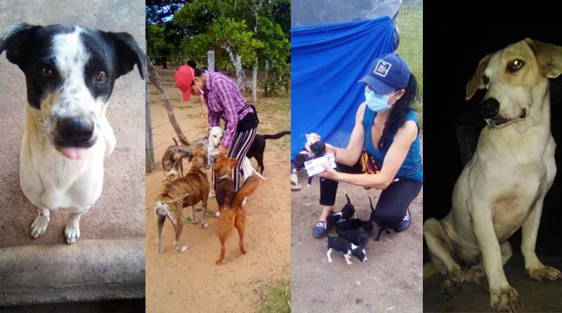 'Huellitas de Amor': una mano amiga para los animales callejeros de Puerto Carreño