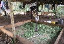 Destruyen laboratorio de coca en zona rural de Cumaribo